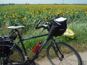 Forlì-Milano Expo in bici... sognando la ciclabile della via Emilia